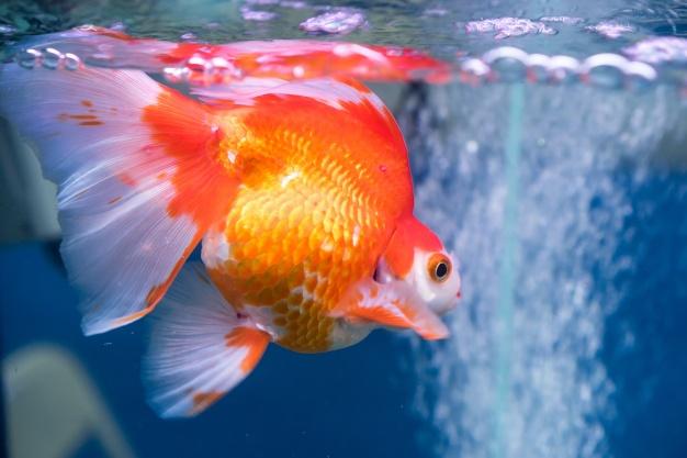 อาหารปลาสวยงามราคาส่ง